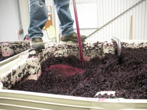Manual punchdown of Syrah grapes